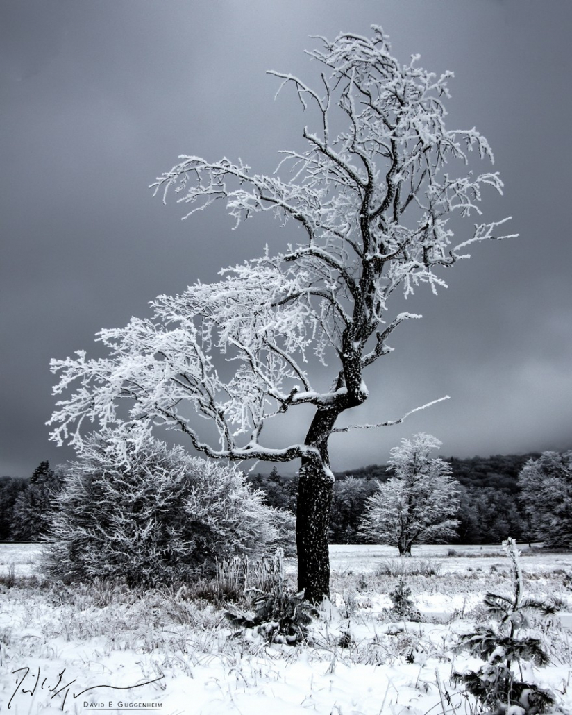 """""""Scraggly Tree"""" - A windswept tree, frozen during a severe winter. This is a high dynamic range (HDR) image combining 10-20 separate images. (Canaan Valley, West Virginia.)"""
